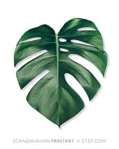 Palm Leaf Print Monstera Botanical By ScandinavianPrintArt