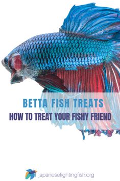 We know, you love your betta fish! He's like your baby right? Well every now and then it's only fair if your betta fish gets a little treat.So, whatever the occasion – birthday, the anniversary of bringing him home, Christmas or even the celebration of doing your weekly water change – you should and will find a reason to give your betta fish a treat. #bettafish #fishcare Betta Fish Toys, Betta Fish Care, Mosquito Larvae, Brine Shrimp, Favorite Position, Small Insects, Cool Tanks, Celebration, Anniversary