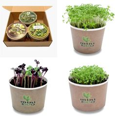 Growing Microgreens, Growing Herbs, Micro Herbs, Vegetable Packaging, Plant Zombie, Seed Germination, Cress, Grow Your Own Food, Garden Seeds