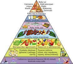 sonic: odwrócona piramida żywieniowa
