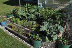 Home Garden Tips | Home Gardening Advice | DIY Home Gardening