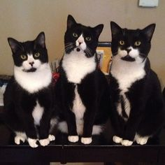 Meet The Suavest Cat Brothers On Instagram... click and stroll down to see more photos of them.