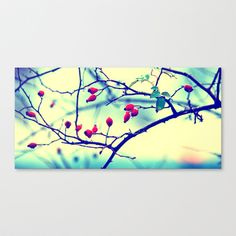 Rosehips with water beads Canvas Print by Tanja Riedel - $85.00