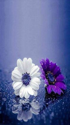 21 Ideas Flowers Wallpaper Iphone Purple For 2019 Amazing Flowers, My Flower, Pretty Flowers, Purple Flowers, Flower Art, Beautiful Flowers Wallpapers, Beautiful Nature Wallpaper, Pretty Wallpapers, Desktop Wallpapers