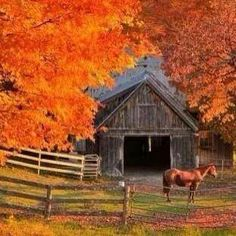 Barn & horse with beautiful Fall colors! Country Barns, Old Barns, Country Fall, Country Living, Country Roads, Vermont, Autumn Scenes, Autumn Morning, Morning Light