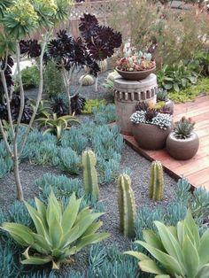 daniel nolan garden design / front yard makeover, millbrae