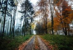 Autumn Colors - Google+ Country Roads, Autumn, Colors, Google, Pictures, In Living Color, Fall, Colour, Paintings