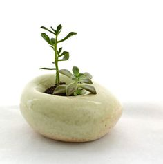 land-m-studio-planter-495x498