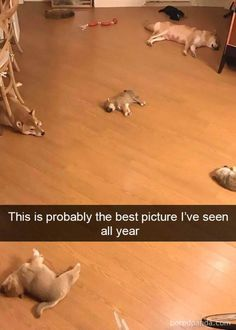 Dog Pictures Meme Dump Of The Day - 4