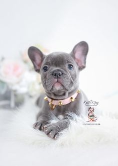 Puppy Dog Eyes Card Collection French Bulldog Puppy Pierre NEW