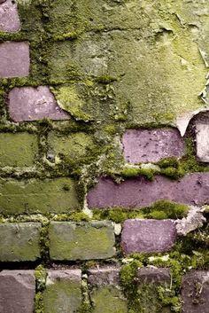 texture- because it shows the brick growing moss Green Colors, Colours, Texture Art, Green Texture, Shade Garden, Natural Texture, Wabi Sabi, Textures Patterns, Brick Patterns
