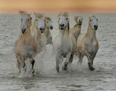 500px / Horses by Stephen Wallace