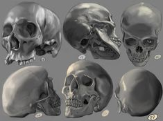 Drawing practise - Human Skulls 2 by IgnazioDelMar on DeviantArt