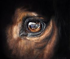 Mirror of the soul by Ianish on DeviantArt Horse Photos, Horse Pictures, Majestic Horse, Beautiful Horses, Horse Drawings, Animal Drawings, Beautiful Comments, Horse Anatomy, Horse Wallpaper
