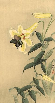 Butterfly and Lily Ohara Koson 1913