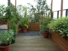 een eetbare tuin op het dakterras
