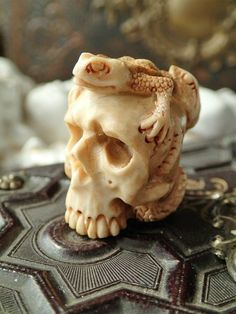 Memento mori German carved Deer horn Skull