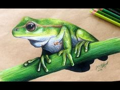 Color Pencil Drawing Realistic green tree frog drawing by Jess Elford. Drawn with prismacolor pencils on tab paper - Animal Sketches, Animal Drawings, Pencil Drawings, Art Sketches, Art Drawings, Horse Drawings, Drawing Art, Drawing Ideas, Colored Pencil Artwork