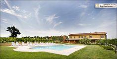 vineyard and pool