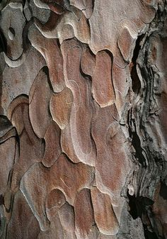 tree bark - growing up we had 2 pine trees in the front yard that had layered bark and looked like this