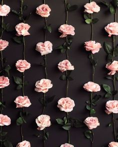 Excuse My French rose vine diy idea in home decor. You could attach these to make them like the ones sold in art stores. Pink roses on black background.