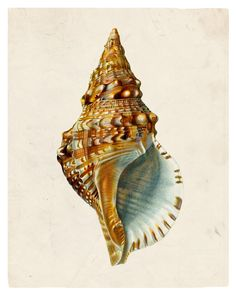 The Single Sea Shell Antique Illustration  8 x 10 Giclee Art Print Upcled Collage Recycled Book Art Buy 2 Get 1 FREE