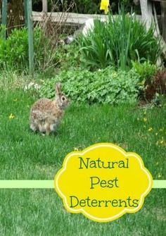 1000 images about gardening on pinterest plants How do you keep rabbits out of your garden