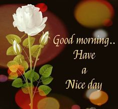 G Morning, Morning Wish, Good Morning Images, Good Morning Quotes, Day, Google, Flowers, Photography, Gud Morning Images
