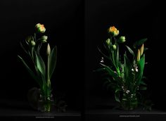 Red and orange tulip bouquet. Photography by Serena Carminati. You can see more works on foodfilufe.com.
