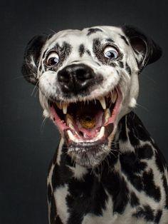 Le photographe allemand Christian Vieler est passé maître dans l'art d'immortaliser les animaux, et en particulier les chiens. Depuis 2012, celui qui est également journaliste a fait le choix de ne photographier unique...