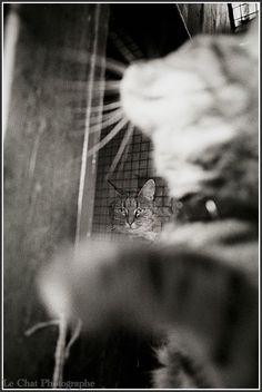 duo de chats dans la chatterie du Refuge