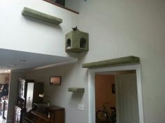 Great idea for indoor cats!