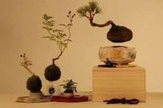 Check out this amazing DIY kit and get a floating and rotating Bonsai tree in your home. It's easy to set up and will make your place look very interesting.