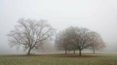 Nieuw in mijn Werk aan de Muur shop: Bomen in de mist.