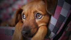 Animalix9 | Its a #Home of all Animals and #Pets with allways the best posts, essays, products 👨👧👦 🐶 http://rite.ly/Kr5d