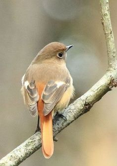 Why Build a Bird Aviary? Cute Birds, Pretty Birds, Small Birds, Colorful Birds, Little Birds, Beautiful Birds, Beautiful Pictures, Animals And Pets, Funny Animals