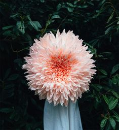 American Artist Tiffanie Turner has created a series of giant and realistic flowers made of crepe paper. Each flower ranges from 2 to 3 feet in diameter and requires 35 to 80 hours of work...
