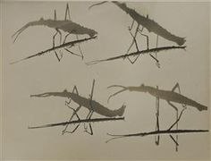 A suggestion was nature films projected, e.g. slow motion. (I just picked a random nature image to illustrate this idea. Stick insects and their shadows)