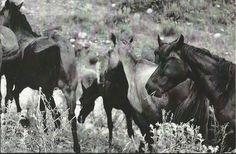 ru-5174071 Olga_Ivan#Horse