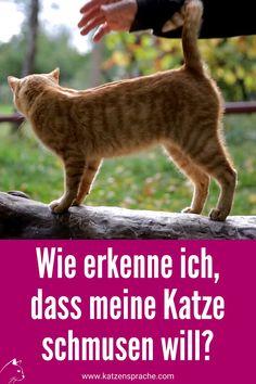 Die Katze lässt sich streicheln, aber wie lange noch? ... #katze #katzen #katzenverhalten #katzentipps #katzenwissen #katzenhacks #katzendraußen #katzeschnurrt #katzeschmust #katzenstreiten #katzenfreundschaft #wohnungskatzen #katzebeißt #katzekratzt