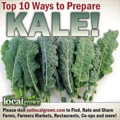 """Kale is considered to be one of the Super Foods for those concerned with eating healthy, local grown diets. According to Wikipedia, """"Kale is very high in beta carotene, vitamin K, vitamin C, lutein, zeaxanthin, and reasonably rich in calcium. Until the end of the Middle Ages, kale was one of the most common green vegetables in all of Europe."""" Click to see the top ten ways to prepare Kale..."""