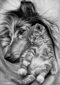 Incredible Dog & Cat Pencil Drawing