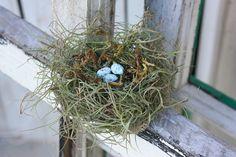 Handmade Bird nest with robbin eggs by victorianstation on Etsy, $12.00