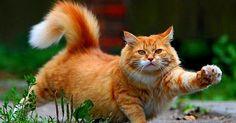 orange aegean cats | Water Sky