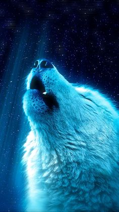 Wolf Images, Wolf Photos, Wolf Pictures, Wolf Wallpaper, Animal Wallpaper, Cool Wallpapers Wolf, Iphone Wallpaper, Wallpaper Backgrounds, Wolf Background