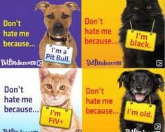 Why not adopt a less adoptable pet?