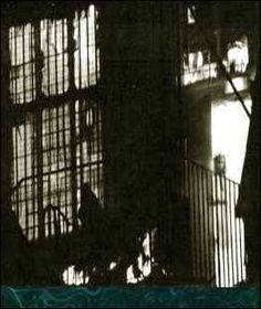 Fantasma no Estábulo
