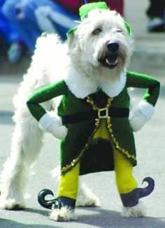 """Buddy the Elf, what's your favorite color?"" #DogCostume, #BuddytheElf #Winning"