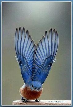 Фото: Расправил крылья)