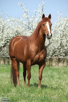 """This pretty chestnut reminds me of a very special """"character"""" in my life."""